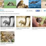 screenshot of Suzi Eszterhas Etsy shop, animal photograph
